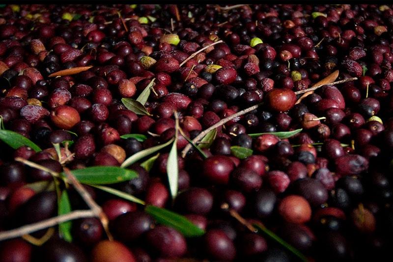 Aceite de oliva calorías